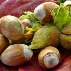 Herfst en eetbare noten