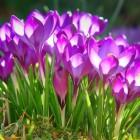 Lentegevoel: 10 tips voor het ultieme lentegevoel (in huis)