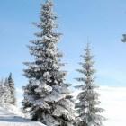 Kerstsymbolen en wat ze betekenen