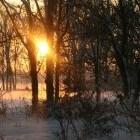 Winterweer: onaangename gevolgen voor mens en dier