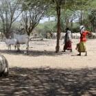 Alles over Somalië, piraterij en de stammenstrijd