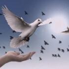 Op welke wijze zoeken religieuze Joden innerlijke vrede?