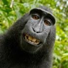 'Een aap op je schouder': Een rotklus van een ander krijgen