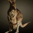 Kangoeroe- of mantelzorgwonen: voor- en nadelen