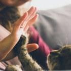 Kattentherapie: spinnen als oplossing voor stress