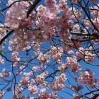 Bestaan lentekriebels echt?