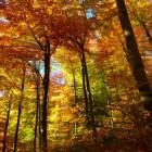 Samhain: het Keltische nieuwjaar