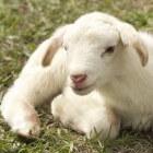 Waarom schiep God dieren?