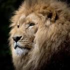 De symbolische betekenis van dieren in de Bijbel