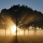 Psalm 5: Morgengebed - De Heer (God) biedt mij bescherming