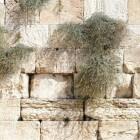 Messiaanse Joden Israël vervolgd door ultra-orthodoxe Joden