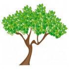 Joodse wortels, achtergrond christendom + edele olijfboom