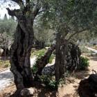 Jezus in Getsemane: leerlingen slapen i.p.v. waken en bidden