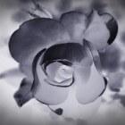 Amanda Knox: schuldig aan moord of onschuldig vastgezeten?