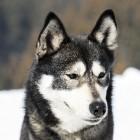 Wolfskinderen: wilde kinderen