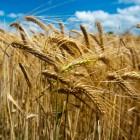 Afrika als landbouwgrond voor rijkere landen
