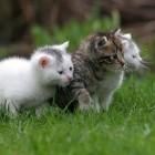 Wat is kattenkwaad?