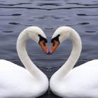 Relatieproblemen door gebrek aan intimiteit