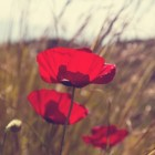 Overdenking bij Pasen