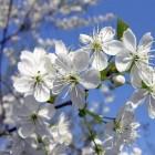 Bloemen etiquette: Bloemen bij een begrafenis