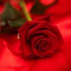 Het perfecte Valentijns cadeau